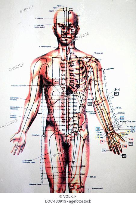 illustratipon - body - acupuncture