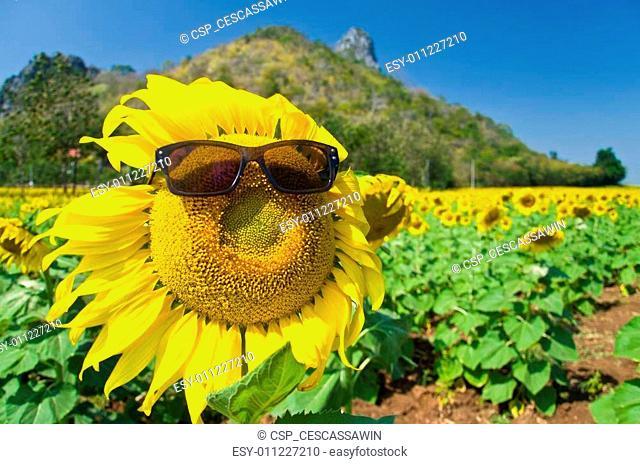 Beautiful Sunflower field