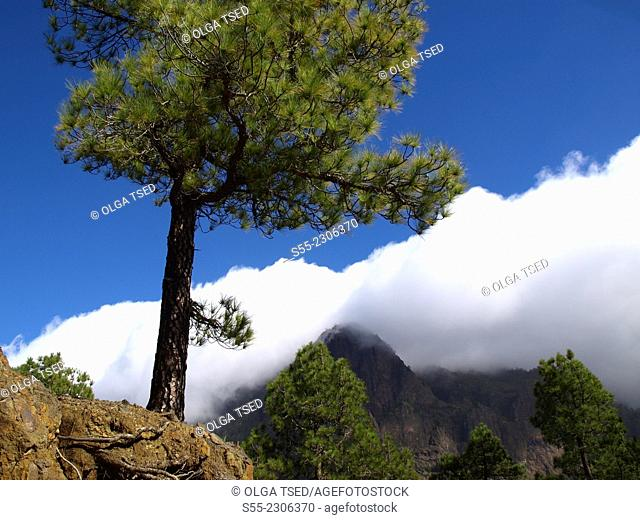 La Cumbrecita, Caldera de Taburiente Nacional Park, La Palma, Canary Islands, Spain, Europe