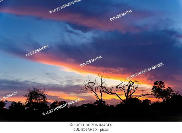 Silhouetted trees at dusk, Okavango Delta, Chobe National Park, Botswana, Africa