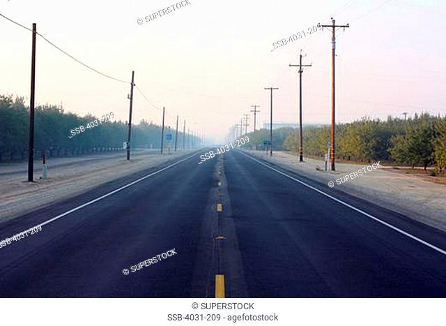 USA, California, Kern County, Deserted country road through almond orchards in morning