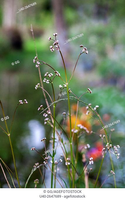 Guatemala, Tecpan, wild flowers