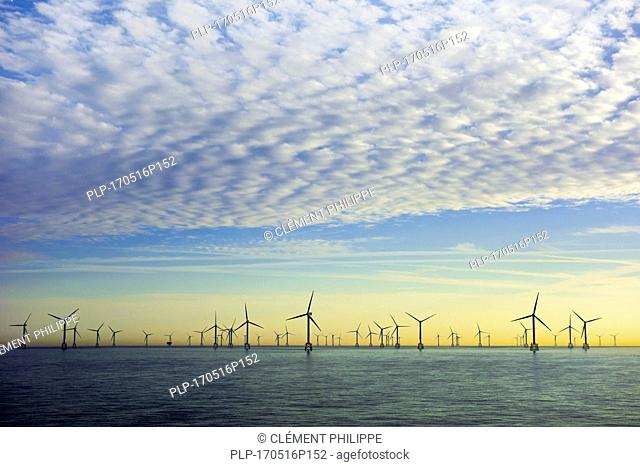 Wind turbines of the Thorntonbank Wind Farm, offshore windfarm off the Belgian coast in the North Sea at sunset