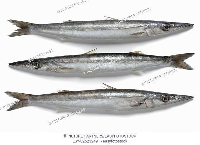 Fresh raw barracuda fish on white background