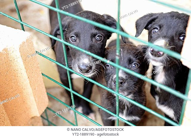 Rescued and abandoned dogs in dog shelter, Getafe, Spain