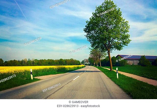 Springtime in Bavaria, country road flanked by yellow field of canola cultivation