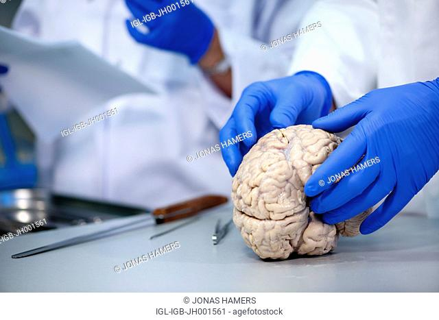 Dissection of human brain made by a scientist wearing blue gloves