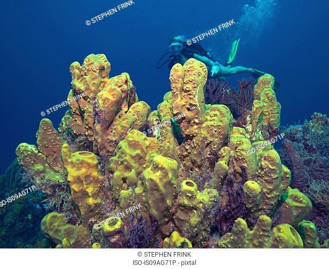 Diver and sponge cluster