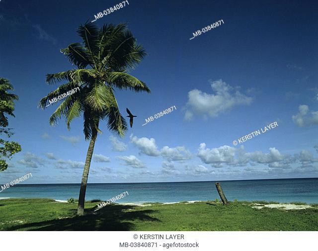 Coconut palm, beach, sea