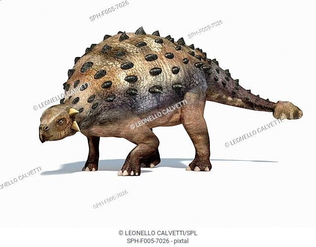 Ankylosaur, computer artwork. This heavily-armoured dinosaur lived in the early Mesozoic era, in the Jurassic and Cretaceous periods