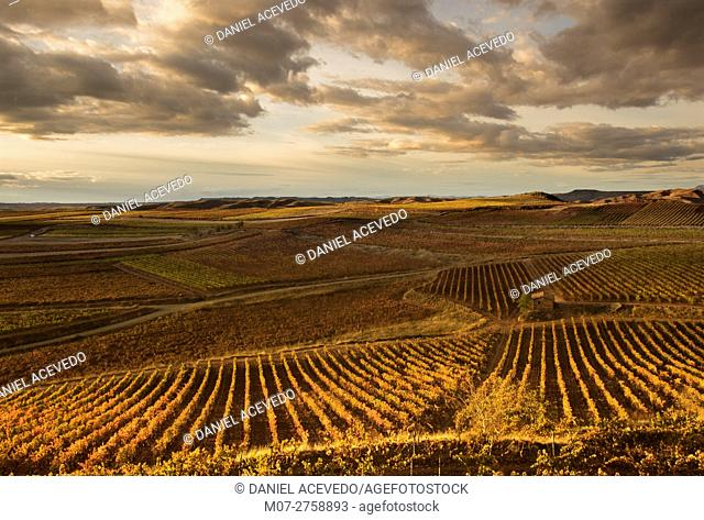 Cárdenas vine scape, La Rioja wine region, Spain, Europe