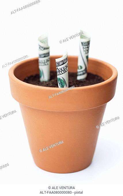 One-hundred dollar bills planted in flower pot