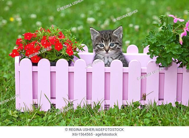 Kitten, sitting in plant pot holder in garden, Lower Saxony, Germany