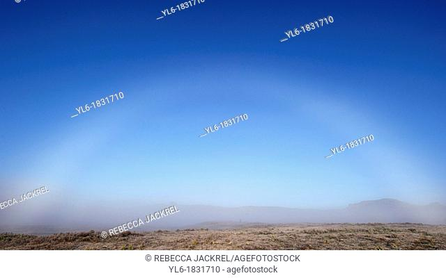 Fog bow in the Bale Mountains of Ethiopia