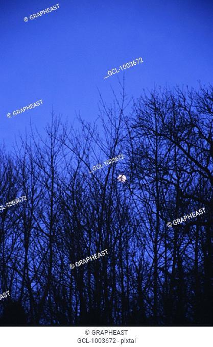 Full moon shining through trees in Lyon, France