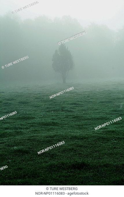 A tree in a misty field