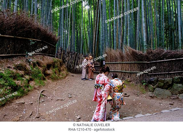 Bamboo forest of Arashiyama, Arashiyama-Sagano, Kyoto, Kansai region, Honshu island, Japan, Asia