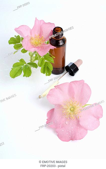 Bach flower remedy with wild rose