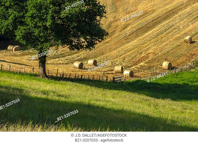 France, Auvergne, Cantal, summer landscape near Boisset