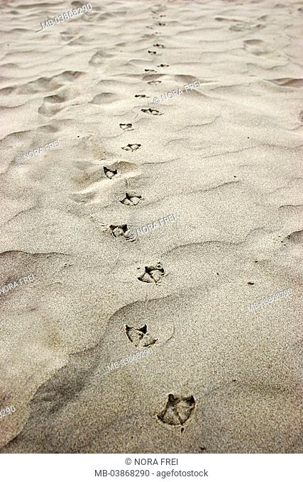 Sandy beach, seagull-tracks, nature, beach, sand, tracks, marks, footprints, bird, animal, seagull, seabird, habitat