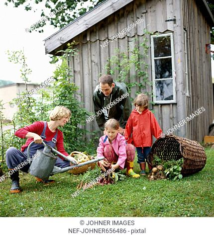 A family working in a garden, Sweden