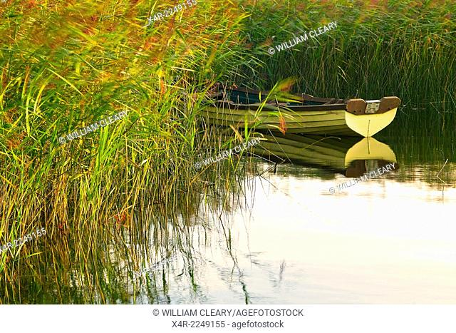 Boat among the rushes, early morning, Lilliput, Lough Ennell, County Westmeath, Ireland