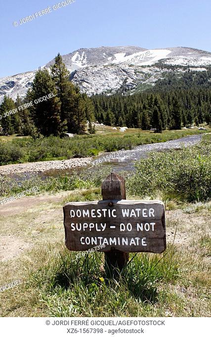 Drinking water, Yosemite National Park, California, Usa