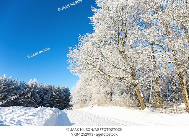 Trees Covered with Snow, Estonia