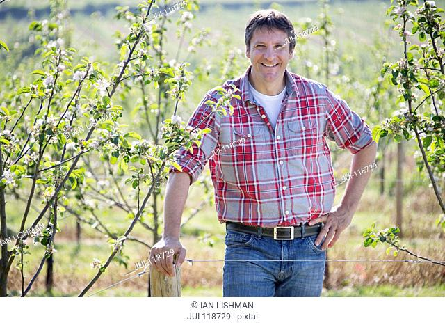 Farmer checking cider apple trees in orchard and smiling at camera