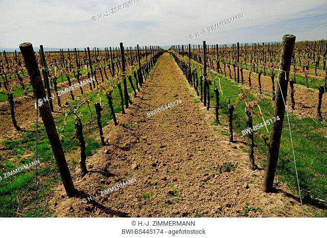 vine rows, Germany