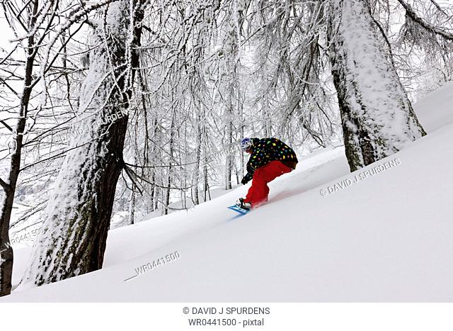 A snowboarder riding through a snowy forest