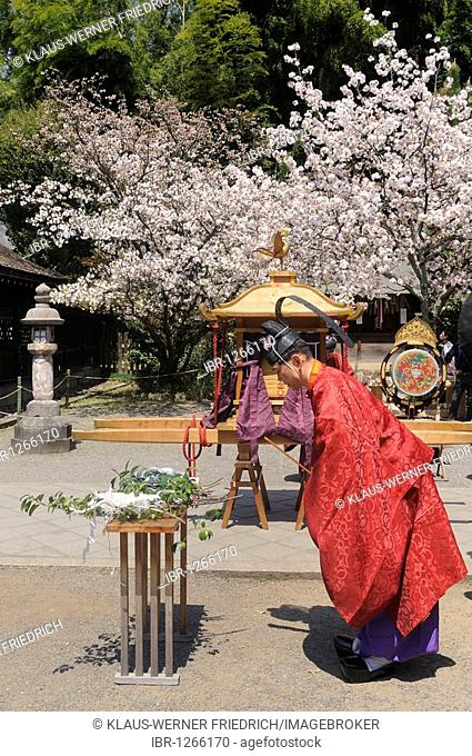 Shinto priests at a ritual act, Hirano Shrine, Kyoto, Japan, East Asia, Asia