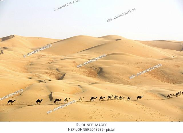 Camel caravan on desert