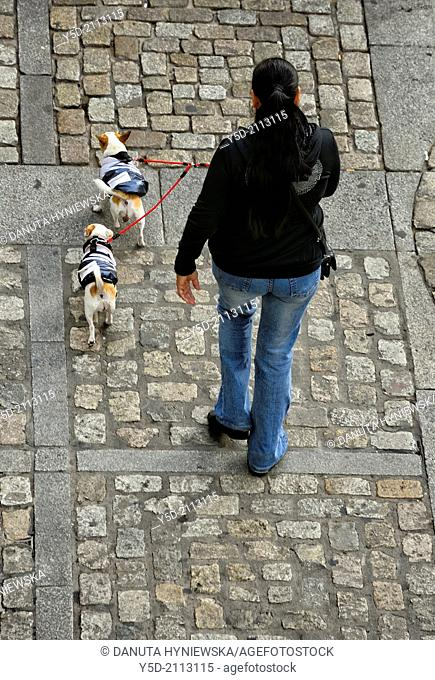 woman walking with two dogs in warming vests, on a leash, cobbled Cathedral Square, Cadiz, Andalusia, Spain, view from above