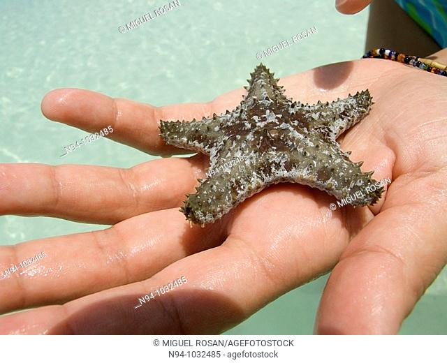 Close up of a hand showing a small starfish with five points just taken on the beach