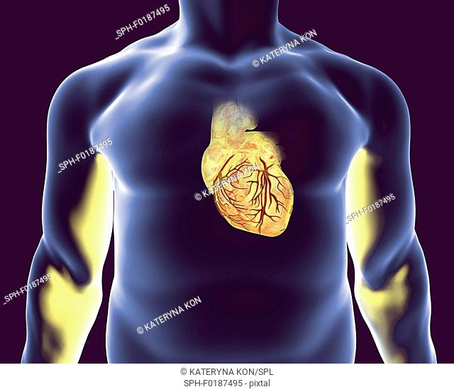 Heart with coronary blood vessels, computer illustration