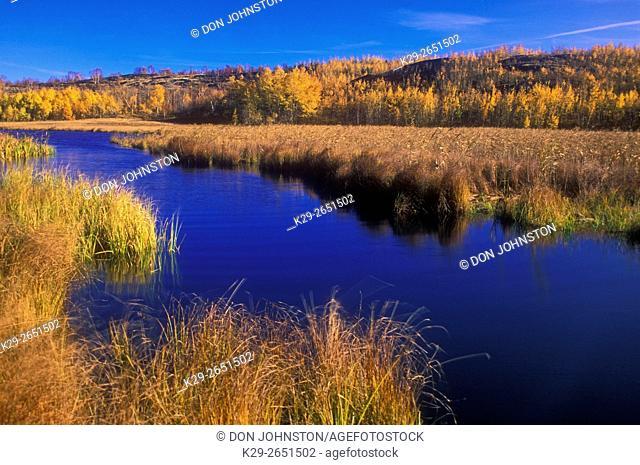 Autumn grasses along shore of Robinson Lake, Greater Sudbury, Ontario, Canada