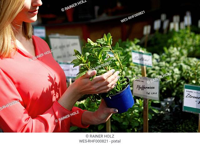 Woman with flowerpot of mint on weekly market