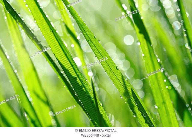 Grass and droplets