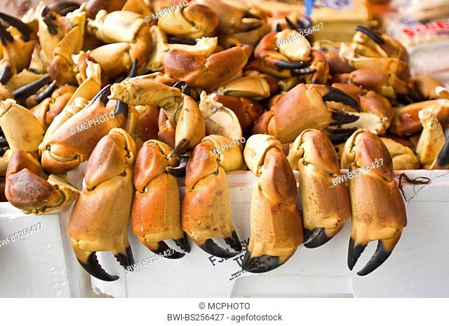 crab claws at the fish market , Norway, Bergen