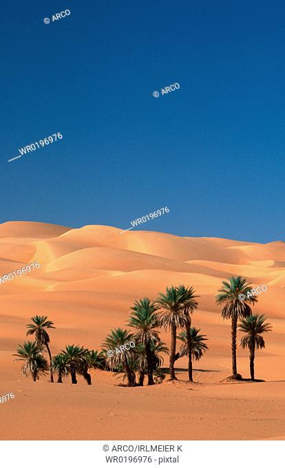 Date, Palms, Sahara, Erg, Ubari, Libya,Phoenix, dactylifera