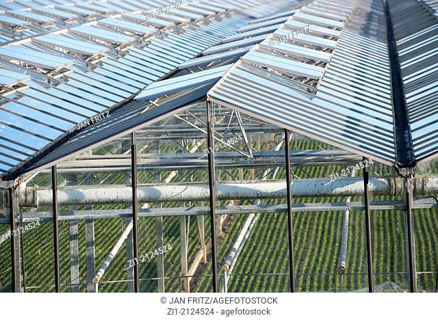 rooftops of greenhouses in Westland, the Netherlands