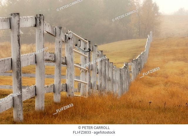 Farm fence on foggy autumn day, Strathcona County, Alberta