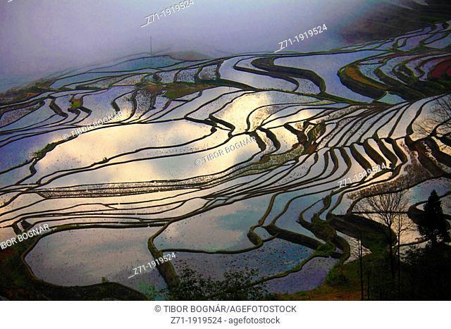 China, Yunnan, Yuanyang, Shengcun, rice terraces