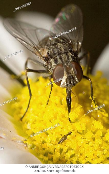 Fly, Evora, Portugal