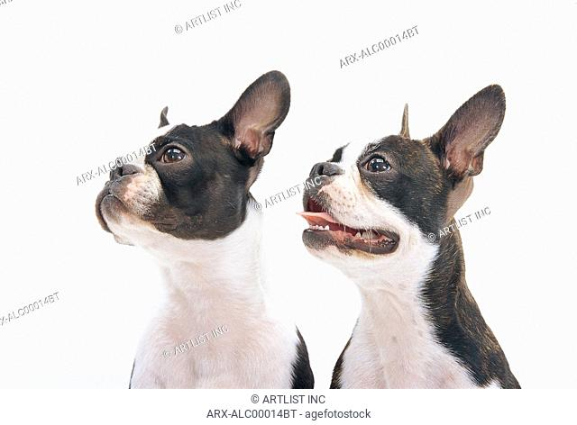 Two dogs looking left