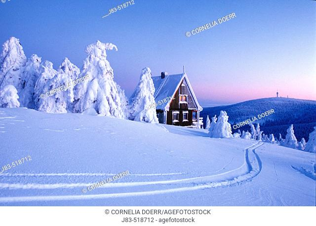 Snow-covered spruce trees and wood house, Ore Mountains, Saxony, Germany